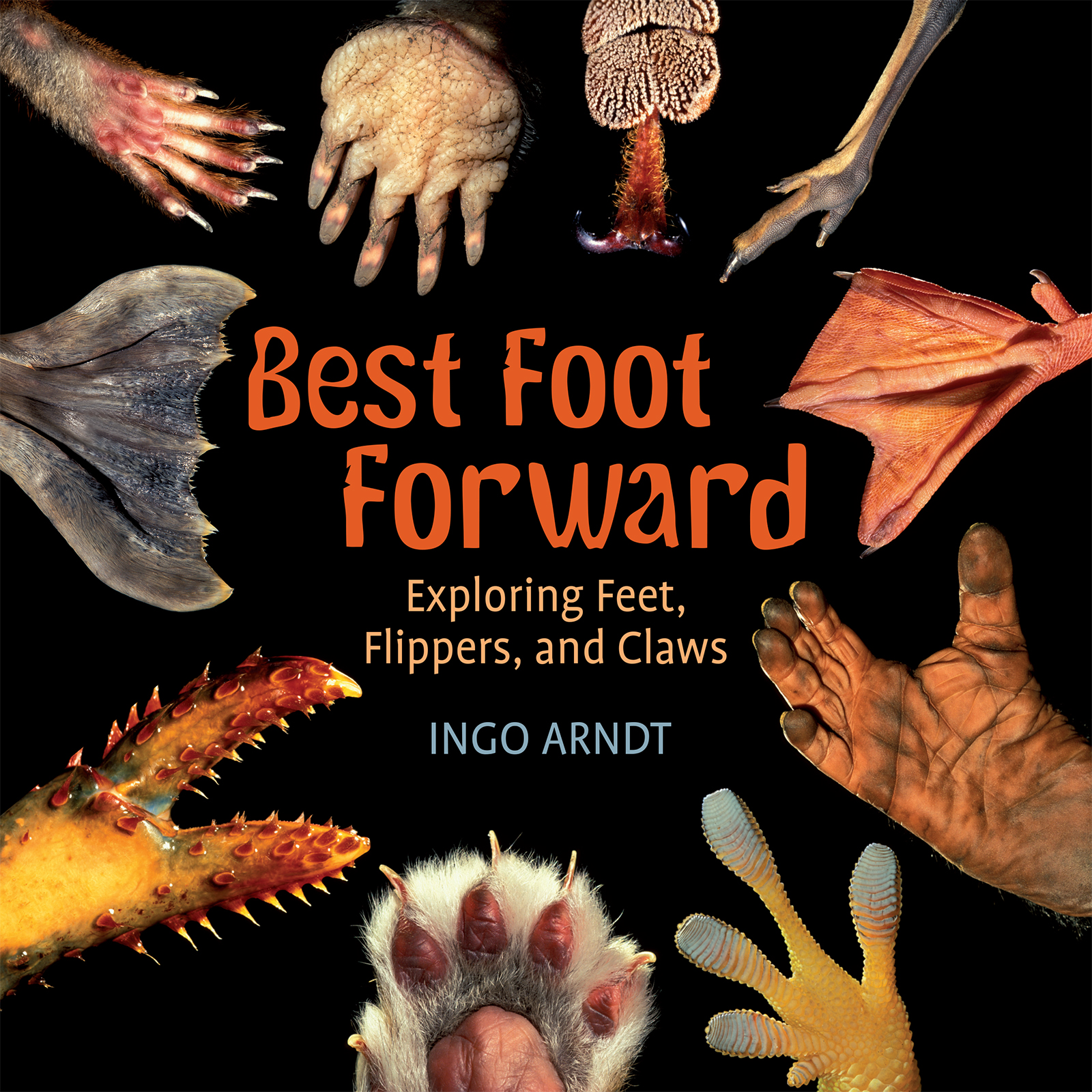 Best Foot Forward Exploring  Feet, Flippers, and Claws