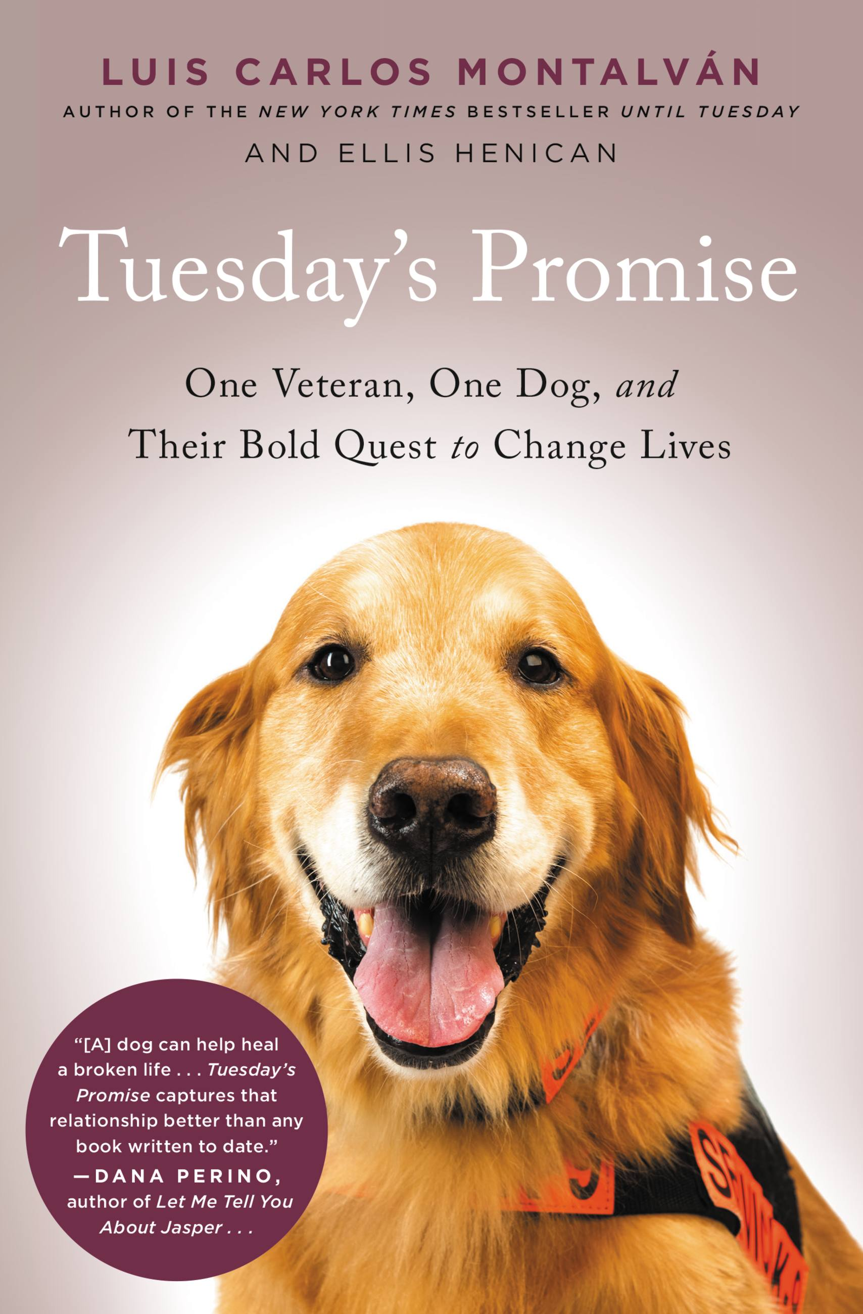 Tuesday's Promise One Veteran, One Dog, and Their Bold Quest to Change Lives