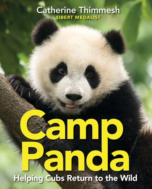 Camp Panda Helping Cubs Return to the Wild
