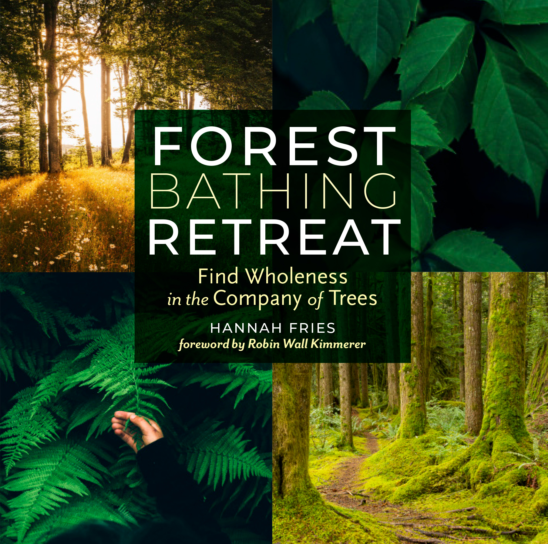 Forest bathing retreat find wholeness in the company of trees