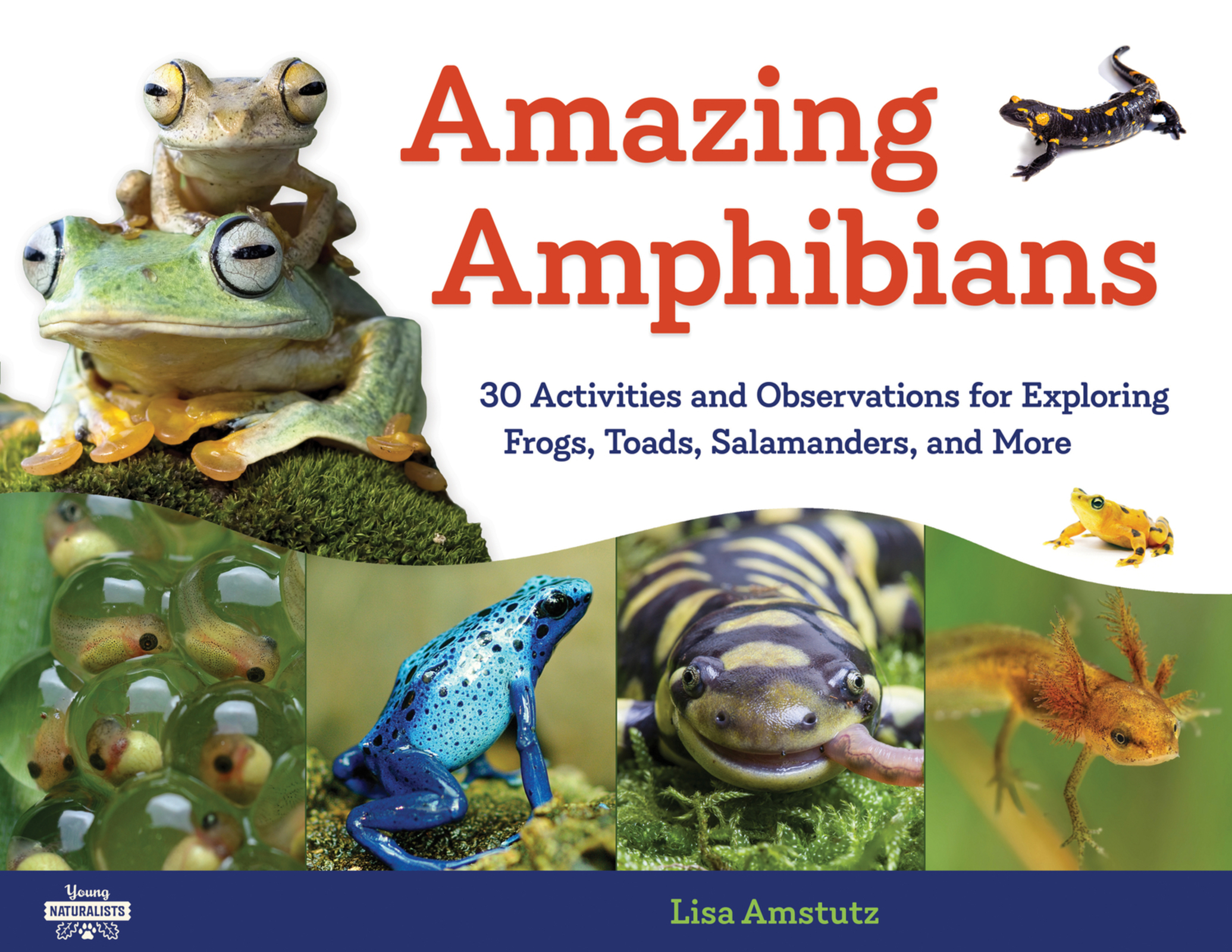 Amazing Amphibians 30 Activities and Observations for Exploring Frogs, Toads, Salamanders, and More